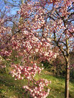 Rowan Tree | da Martin Handley *
