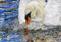 Swan in a temper, Rhian Symes Watercolor Animals, Painting Frames, Bird Paintings, Bird Art, Online Art Gallery, Beautiful Birds, New Pictures, Original Artwork, Wildlife