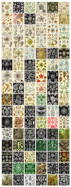 Ernst Haeckel - check him our, amazing!