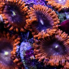 Amphibians, Reptiles, Glass Aquarium, Lunar Eclipse, Terrarium, Beautiful Flowers, Polka Dots, All Glass Aquarium, Terrariums