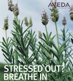 Aveda's new Stress-Fix is clinically proven to relieve feelings of stress using ecocert-certified organic french lavender, lavandin and clary sage.