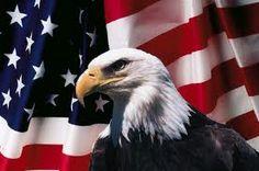 Bald eagle/American Flag
