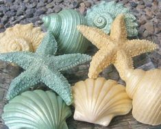 Decorative Gold and Light Green Seashell and Starfish Soap - Set of Eight Shimmery Soaps
