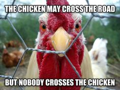 Don't Mess With The Chicken
