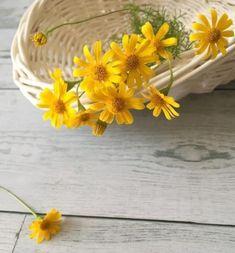 Flower Background Wallpaper, Cute Wallpaper Backgrounds, Flower Backgrounds, Pretty Wallpapers, Amazing Flowers, Beautiful Roses, Yellow Flowers, Wild Flowers, Beautiful Flowers