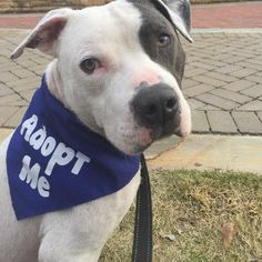 11 Best ADOPT ME images in 2019