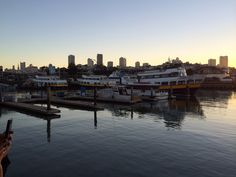 Søløvekoloni på Pier 39