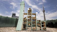 The new bee hotel atop the Fairmont Royal York roof in Toronto hopes to attract and support wild pollinator bees. Fairmont Hotel, Toronto Hotels, Doctor Reviews, Wild Bees, York Hotels, Toronto Star, Hotels And Resorts, Bee Hotels