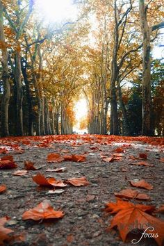 Items similar to Autumn Path - - fine art photo on Etsy Autumn Photography, Amazing Photography, Landscape Photography, Art Photography, Pretty Pictures, Cool Photos, Worms Eye View, Pics Art, All Nature