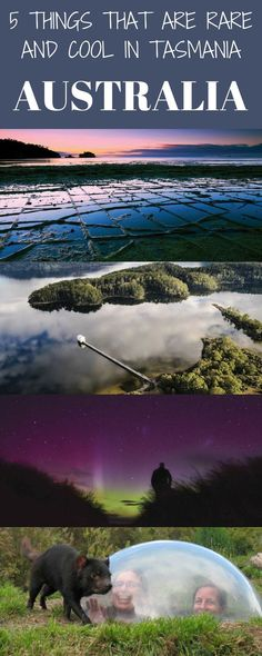 5 things that are rare and cool in Tasmania. Australia�s smallest state astounds with big zingers that will cause some double-takes.