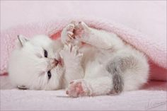 adorable pictures -