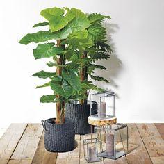 Grote hippe groene planten staan nog mooier in een mand