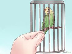 Teach your parakeet to love you
