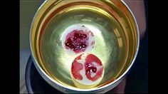 Bloody Hosts and Tempting a Donkey: 6 Incredible Eucharistic Miracles   ...