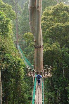 Un paseo colgante en la jungla en Borneo    El turismo sustentable podría salvar muchas selvas, no destruyamos los bosques protejamos el medio ambiente convirtiendo lo que queda de bosques en reservas naturales con manejo sustentable   Protejamos la Biodiversidad y los Ecosistemas para las futuras generaciones