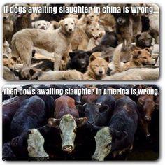 Animal abuse. Animal rights.