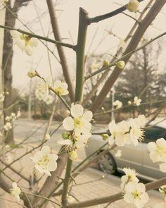 #누구냐넌 ??? #이름 #모를 #봄꽃 에 #출근길 #내마음 이 #샤랄라라랄라 #덕분에 #오늘도 #좋습니다 #감사합니다 #love #spring #드르와 #instagood #instadaily #me #beautiful