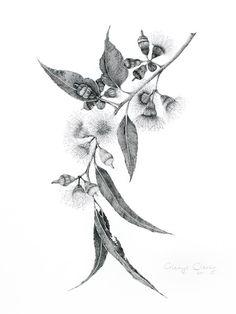 tattoo idea: eucalyptus flowers/leaves