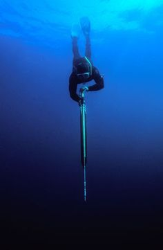 spearfishing - Google Search