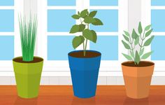 5 Herbs You Should Grow In Your Kitchen | OrganicLife | You don't need a lot of space to enjoy a thriving herb garden.
