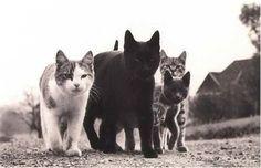 Gangsta cats Westside