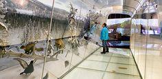 espoo finnish nature centre haltia - Google'da Ara