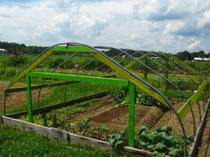 UNH Organic Garden Club