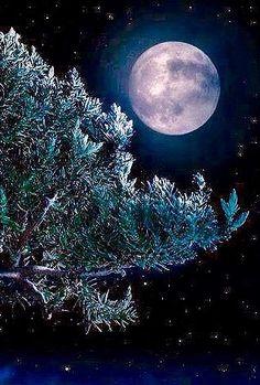 Winter Moon More