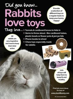 "Rabbits love toys! For some great 'boredom buster' ideas visit <a href=""http://best4bunny.combunny-care/boredom-busters"" rel=""nofollow"" target=""_blank"">best4bunny.com...</a>"