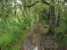 5. Barataria Preserve Trails, Jean Lafitte National Park . Barataria Preserve Trails, Jean Lafitte National Park 5. Barataria Preserve Trails, Jean Lafitte National Park Flickr / Ken Lund  Just minutes away from downtown New Orleans, these covered walkways through the marsh are a perfect way to get a taste of the swamp when visiting the city. Aim for April or May to see the blooming Louisiana Iris. Look out for gators!