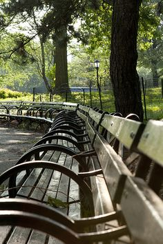 Park benches in Central Park, New York   (I always can spot when CP or NYC is depicted in movies/TV shows when they aren't in the REAL NYC - like Toronto or other locations. If no tall buildings ring the park, it's a fake. And that's just for starters. A true New Yorker just knows what a knock-off or wanna-be looks like.