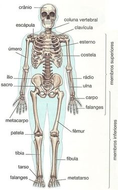 Ossos do Corpo Humano Human Body Anatomy, Human Anatomy And Physiology, Muscle Anatomy, Medicine Notes, Medicine Student, Study Organization, Medical Anatomy, School Motivation, Student Studying