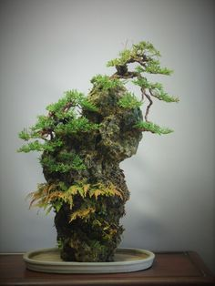 50 Best Bonsai Indoor Trees Ideas For Indoor Decorations - Bonsai Klasik Bonsai Tree Types, Indoor Bonsai Tree, Indoor Trees, Indoor Flowers, Bonsai Plants, Bonsai Garden, Fake Trees, Small Trees, Ming Tree