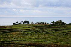 empty paddy field