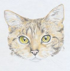 Step-by-step draw a cat