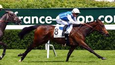 Goldi's Girl: Daughter Of Goldikova Defeats Treve's Sister In G3 Prix Cleopatre - 5/23/17. Horse Racing News | Paulick Report