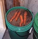 How to store stuff from your garden all winter long. Properly.  Carrots garage, potatoes basement?