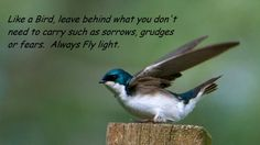Always Fly Light - Tree Swallow
