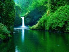 My favorite hike of all time and this isn't even the best of the 6 waterfalls: Punchbowl Falls on Eagle Creek Trail Oregon USA landscape Nature Photos Nature Hd, Nature Images, Nature Pictures, Nature Source, Abstract Nature, Life Pictures, Wallpaper Free, Images Wallpaper, Wallpaper Desktop