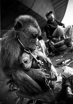 A mother and child. Chained. Terrified. Abused and made to suffer.   The baby's face is heartbreaking.