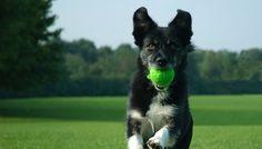 10 regole per vivere con il vostro cane