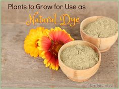 There are many common plants that provide natural dye. They're easy to grow and beautiful in your yard! If you're interested, here are some great options!