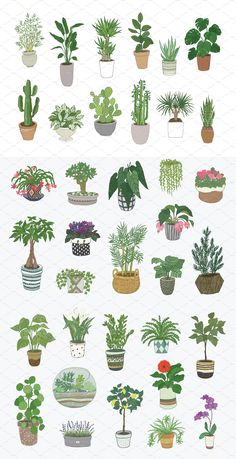 Indoor Plants #vector#products#files#line