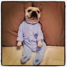 'Im ready for my Slumber Party', French Bulldog in a Onesie.