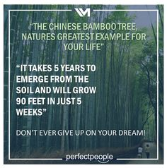 The chinese bamboo tree... Chinese Bamboo Tree, Dont Ever Give Up, You Gave Up, Dreaming Of You