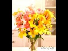 #Celebrate June month of the lily - YouTube www.barendsen.nl