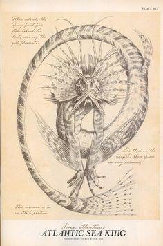Merfolk - Spiderwick Chronicles Wiki - Wikia