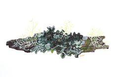 Pequeña rama con líquenes, Senda Darwin, Chiloé. Gouache sobre papel Arches 300 grs. Geraldine MacKinnon - Mi Naturalismo www.gmackinnon.com Gouache, World, Plants, Paper, Botanical Drawings, The World, Plant, Planets