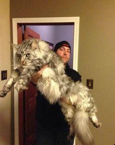 isto é quando elas dizem... Que gato !!!