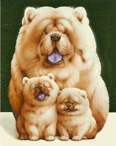Top 5 Most Expensive Dog Breeds Of World Chow Chow Baby Animals Pictures, Cute Animal Pictures, Animals And Pets, Pictures Of Dogs, Cute Little Animals, Cute Funny Animals, Beautiful Dogs, Animals Beautiful, Beautiful Family